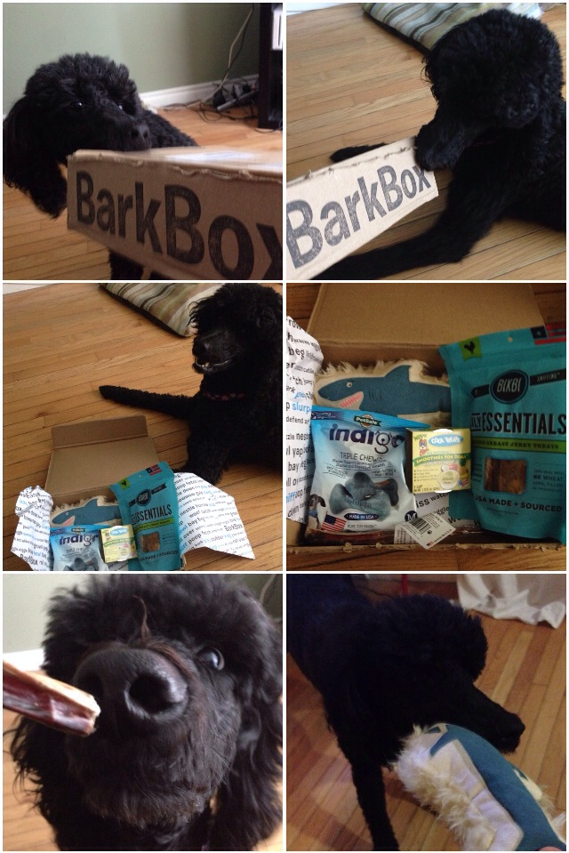 July's Barkbox